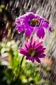 rain_in_the_garden_by_darkosikman